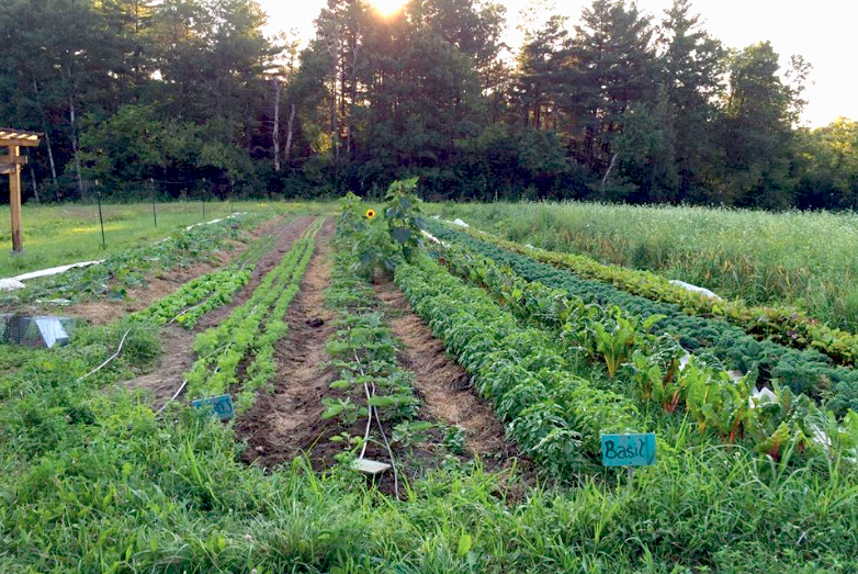 Image courtesy of Purple Carrot Farm