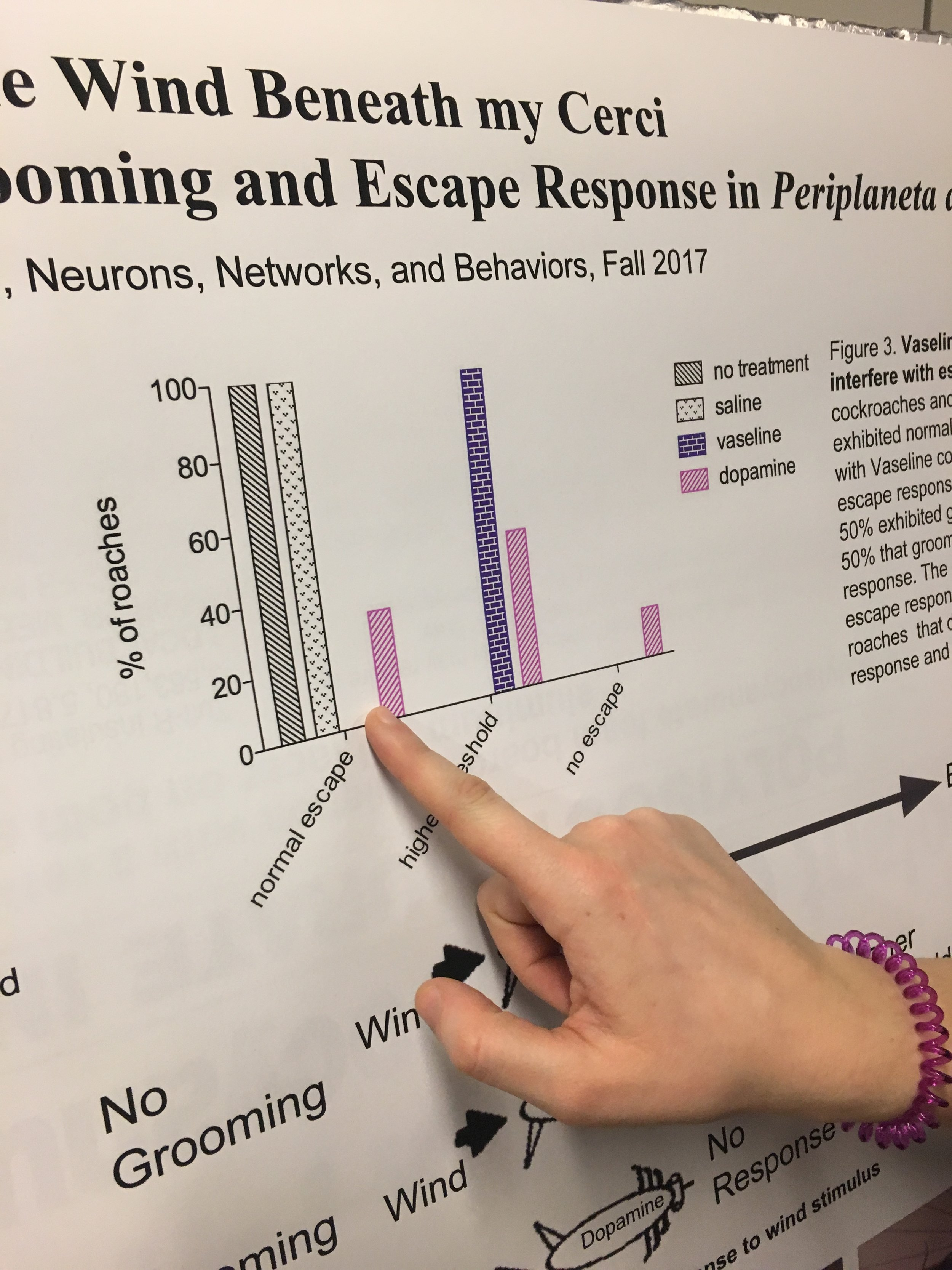 Mary Roth '18 points to a graph displaying the results of her neurobiology experiment.