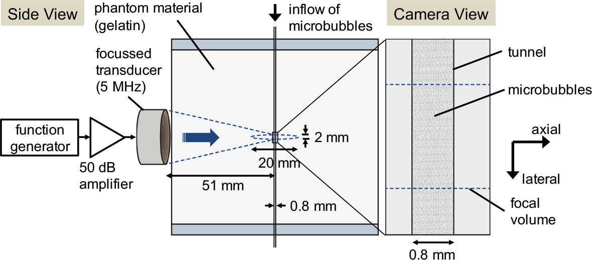 Fig. 1. Experimental setup. A focussed transducer (5 MHz) driven by a function generator and power amplifier emitted ultrasound that converged to a small focal volume within a phantom. A wall-less tunnel within the phantom (1.2% gelatin) represented a physiologically relevant vessel in our body. The interaction of the ultrasound, microbubbles, and tissue were observed using a high-speed optical microscope (1,200 frames per second). [1]