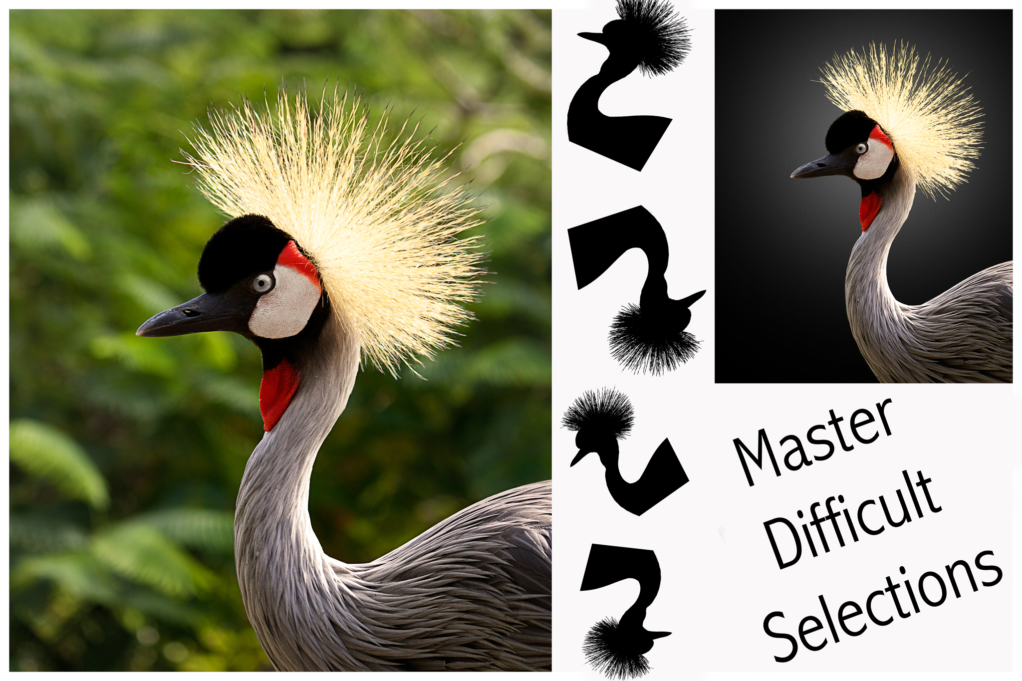 Photoshop Tuition and Lessons in Grimsby, difficult selections