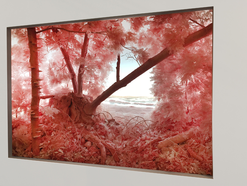 Patrick Jacobs, Pink Forest, 2018, courtesy of Pierogi