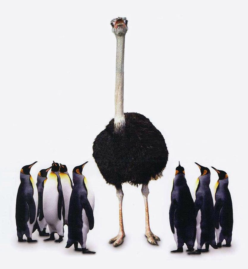 страус пингвин картинки расположение историческом центре