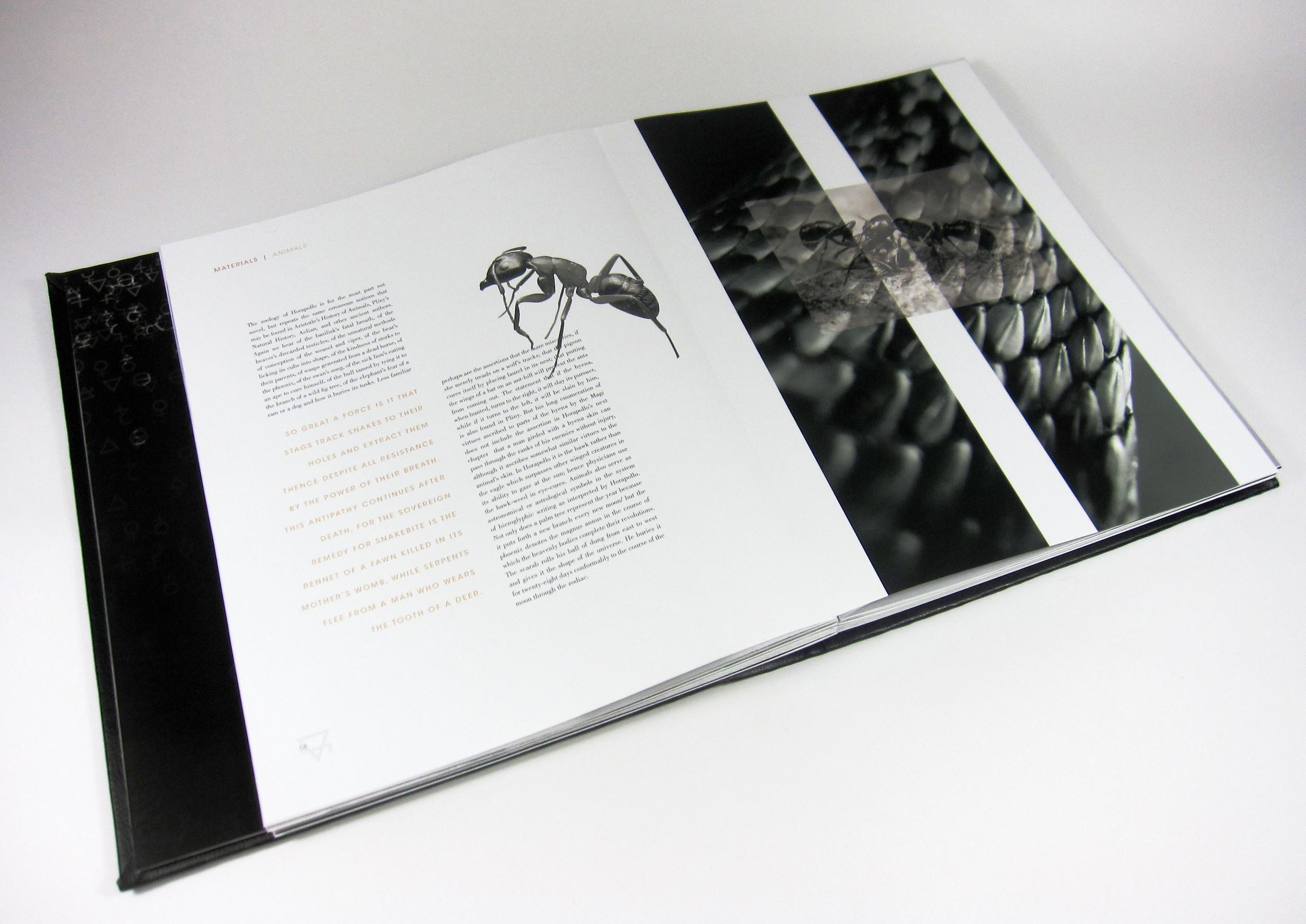 Elements-Animals5.jpg