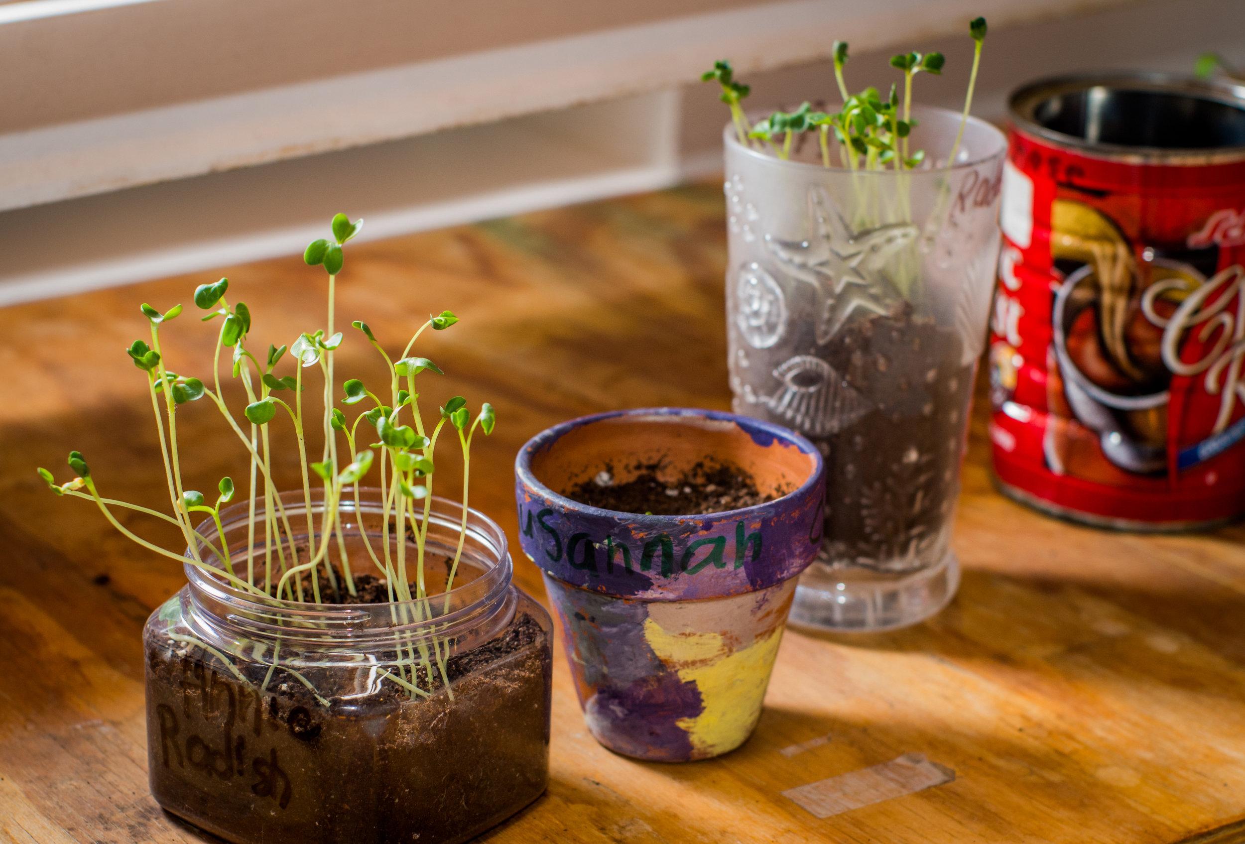 20140305-UCCC Fun & seedlings-PMG_4750.jpg