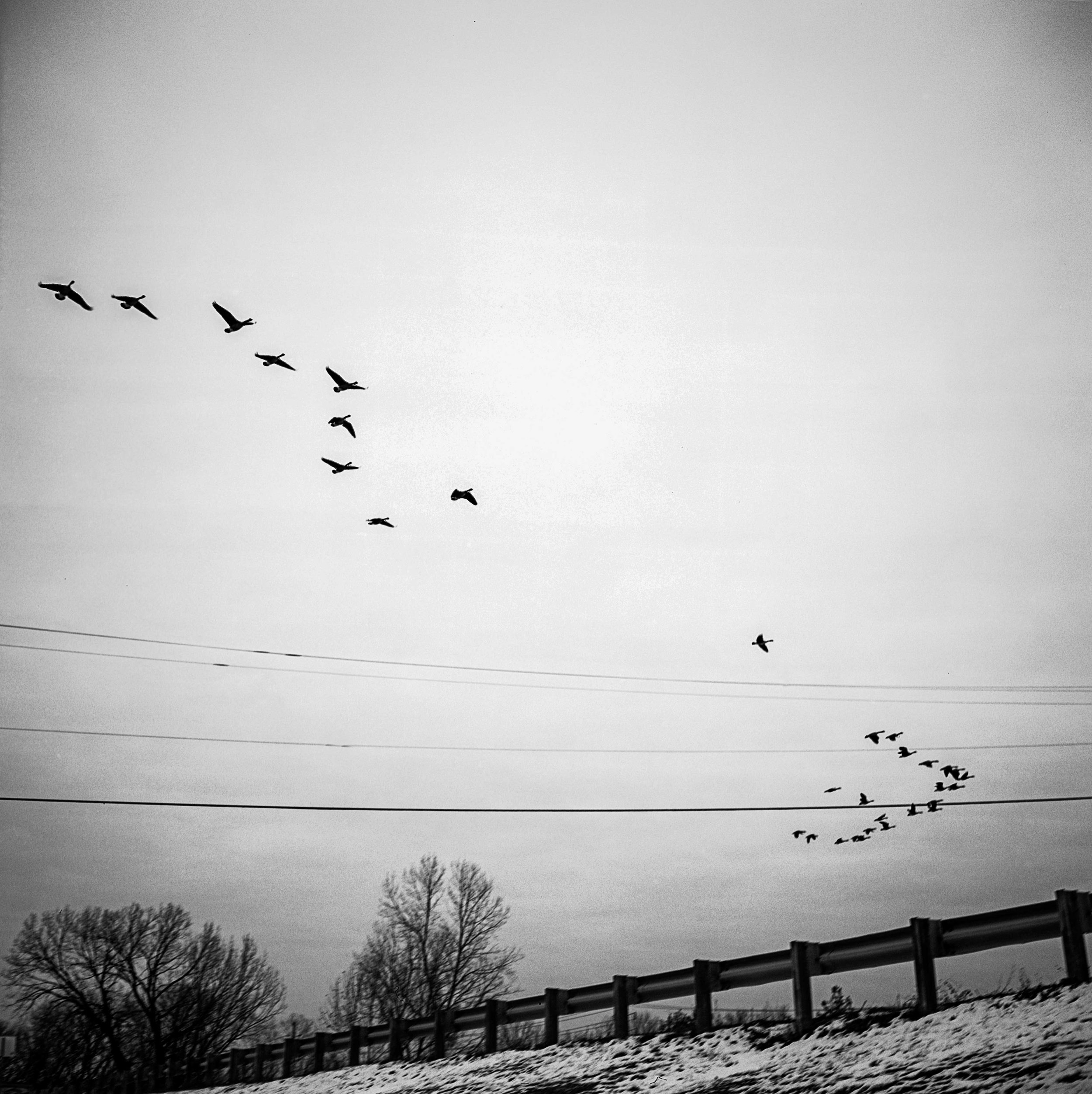 Geese fly Dec. 2017 in St. Louis, Missouri.