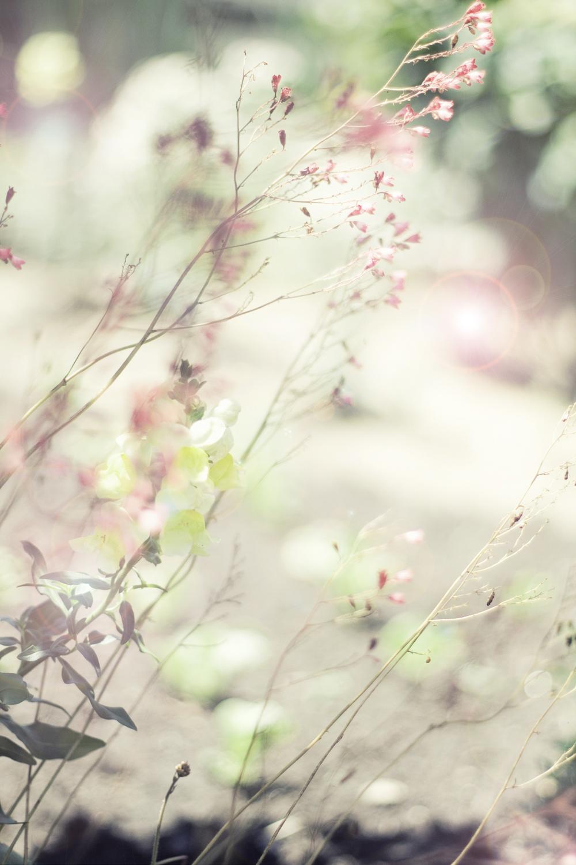 flowers_etsy1.jpg
