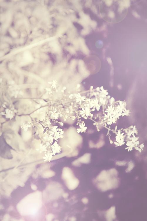 purple flowers.jpg