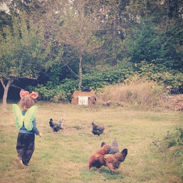 cedar faerie chickens.png