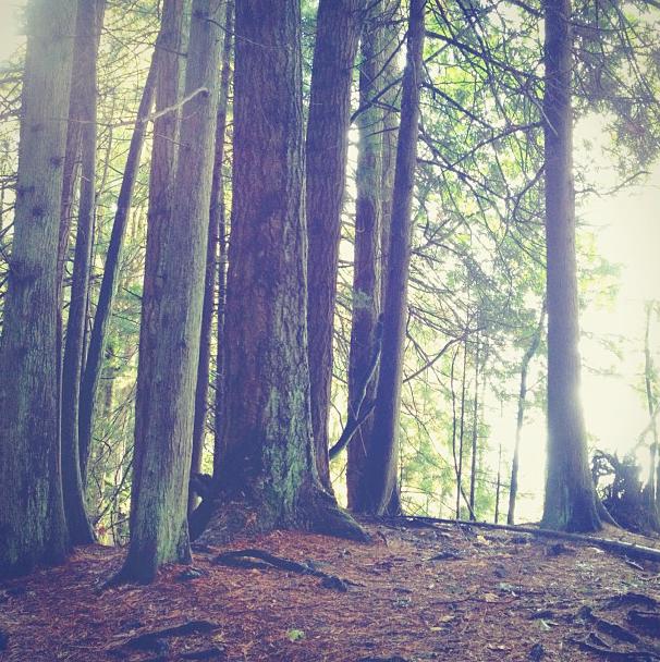 forestwhisper.png