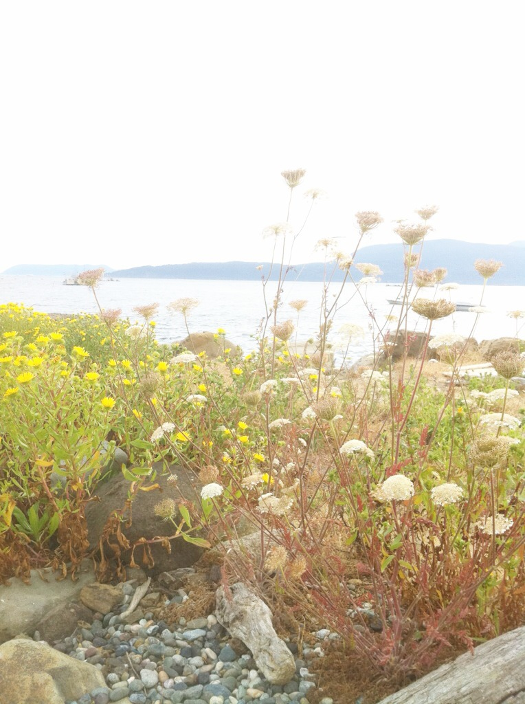 wild island flowers*
