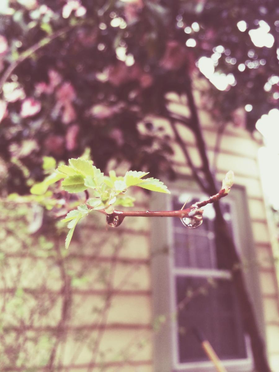 spring droplet*