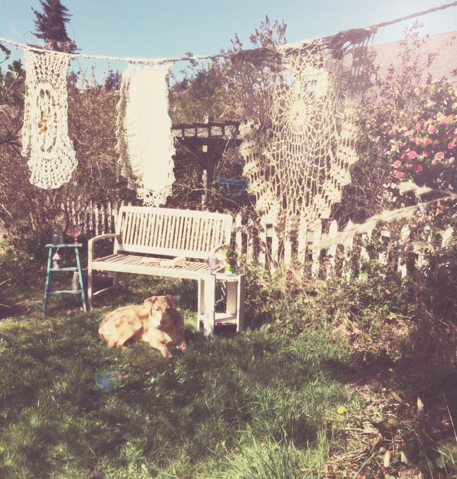 Salish basking in the sun*