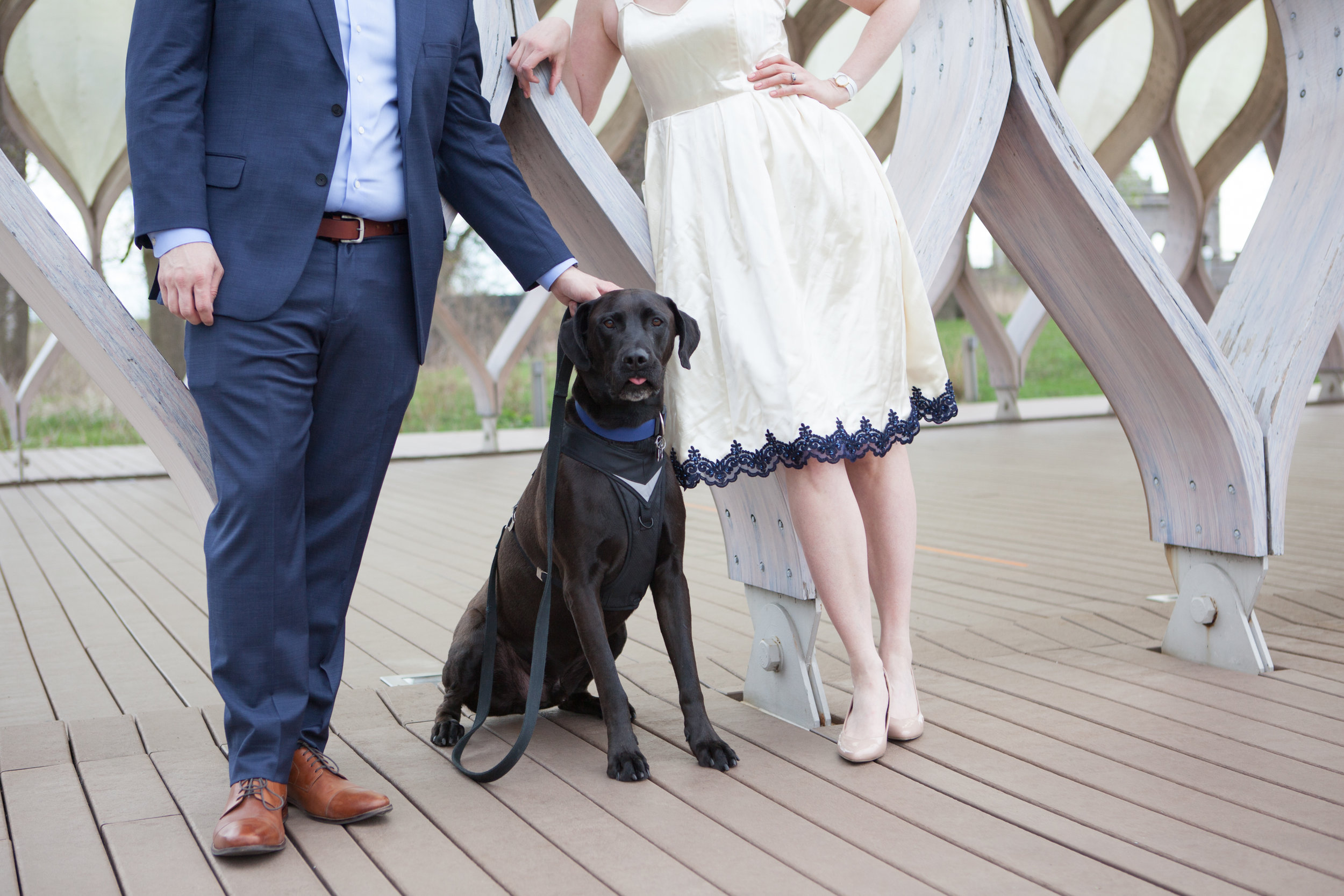 Chicago Engagement with puppy