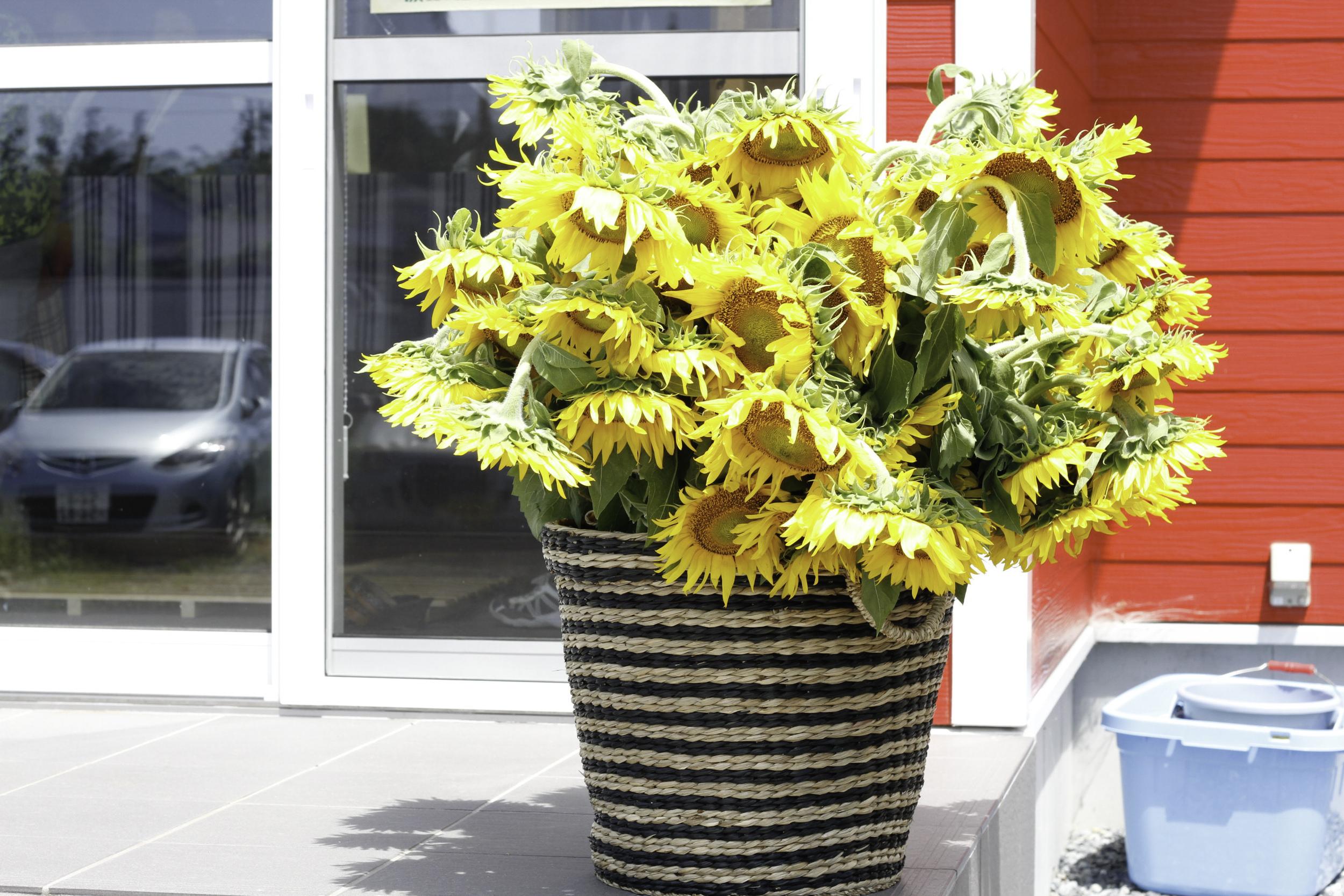 赤いヤーンアライブハウスに元気な黄色がぴったり!Perfect bright yellow and bright red of the Yarn Alive House!