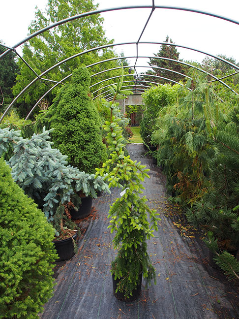A garden tour wouldn't be complete without a visit to a fantastic nursery. Vineland Nurseries specializes in rare and unusual plants, including an excellent selection of dwarf conifers. This beauty came home with me.