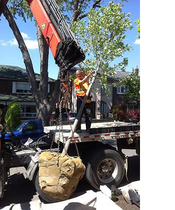 Tree crane.jpg