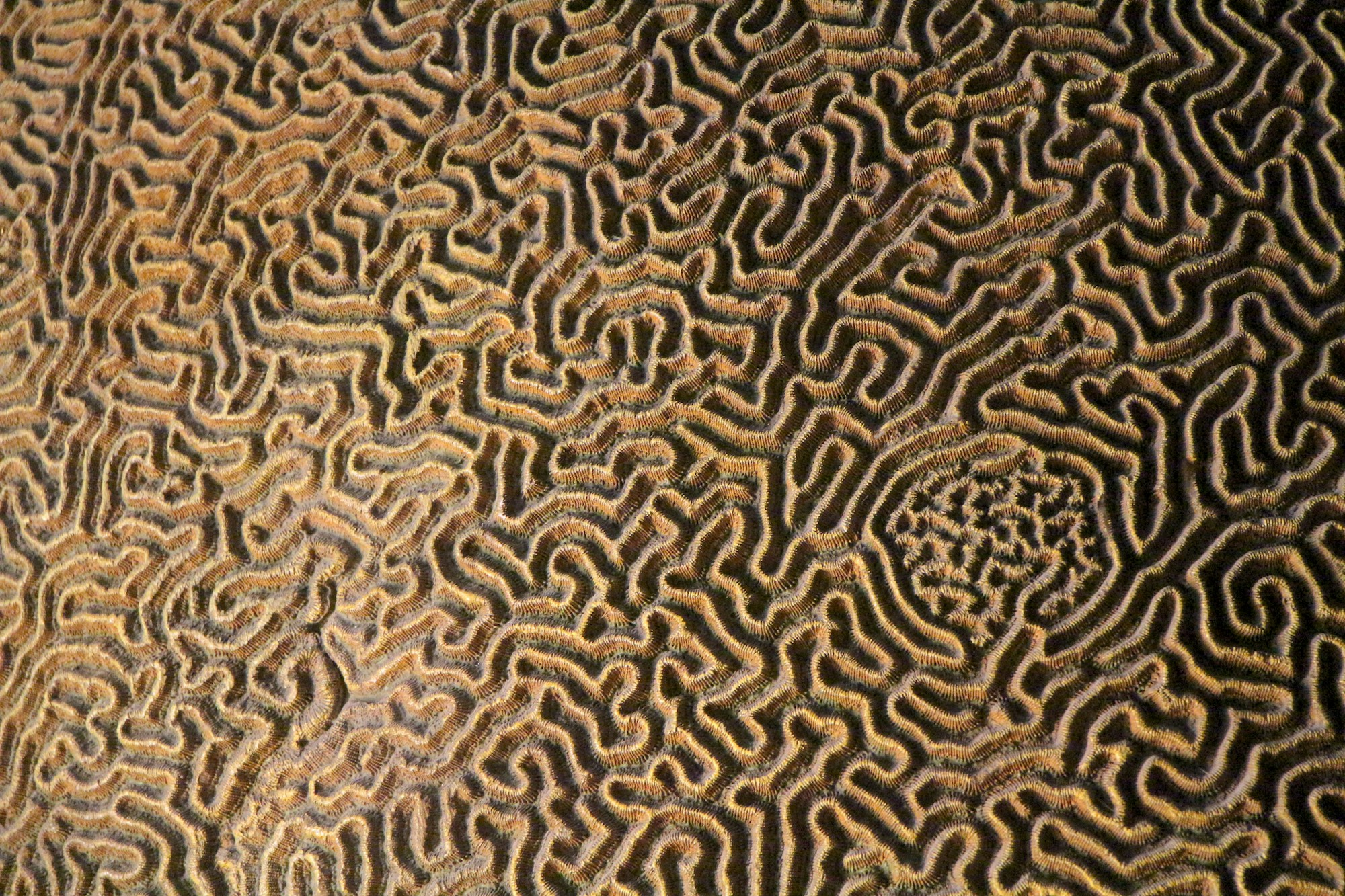 Shape, Pattern & Texture