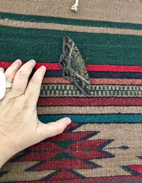 A butterfly inside our classroom decorates beautiful traditional tapestry on the wall. I invite this butterfly into my dreams. Oaxaca is already there.