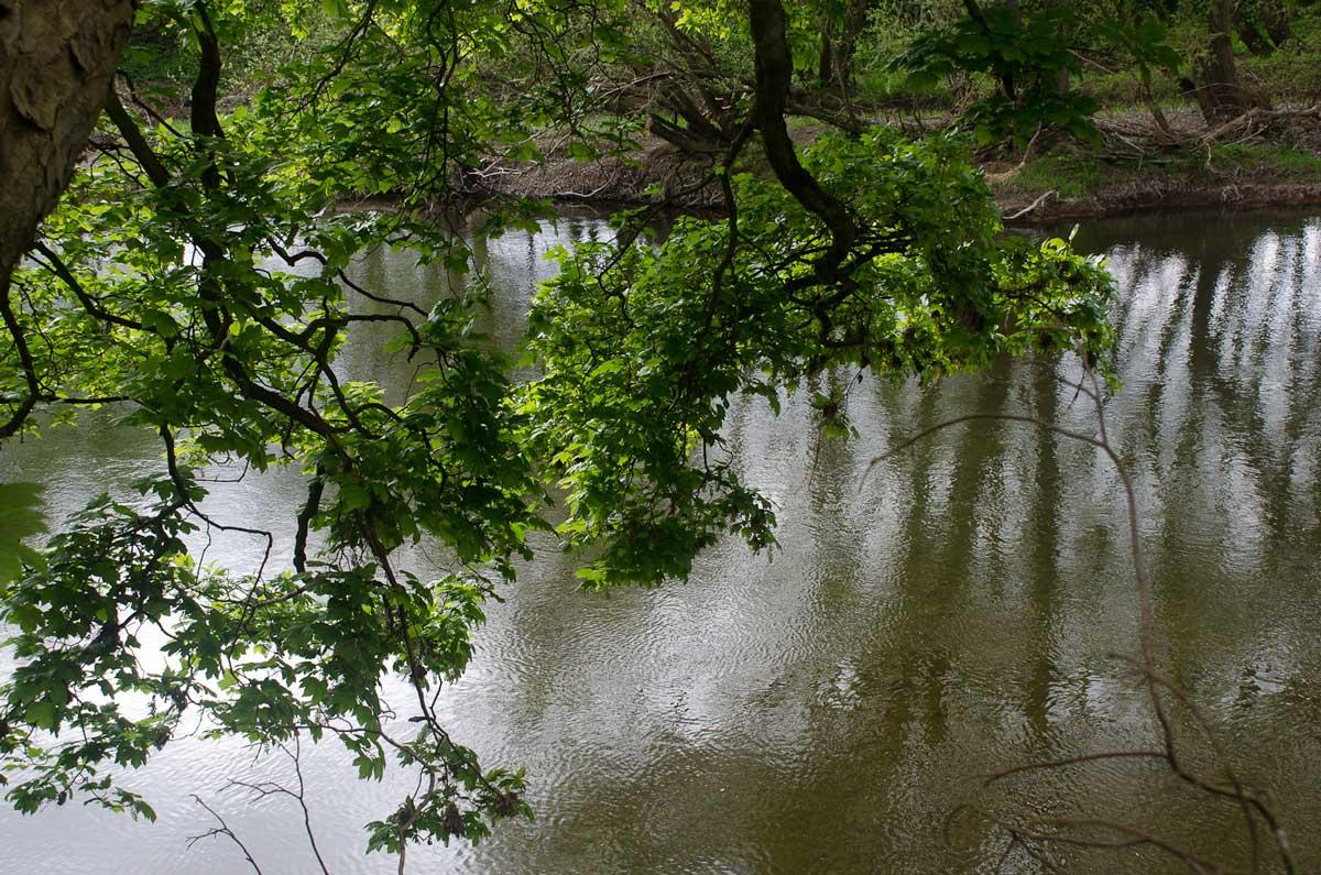 river-1.jpg