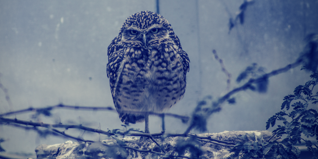 Owls always look so angry. don't they.