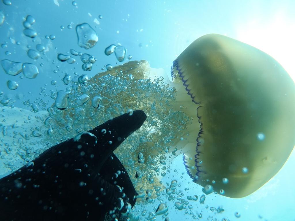 Jellyfish 3 compressed.jpg