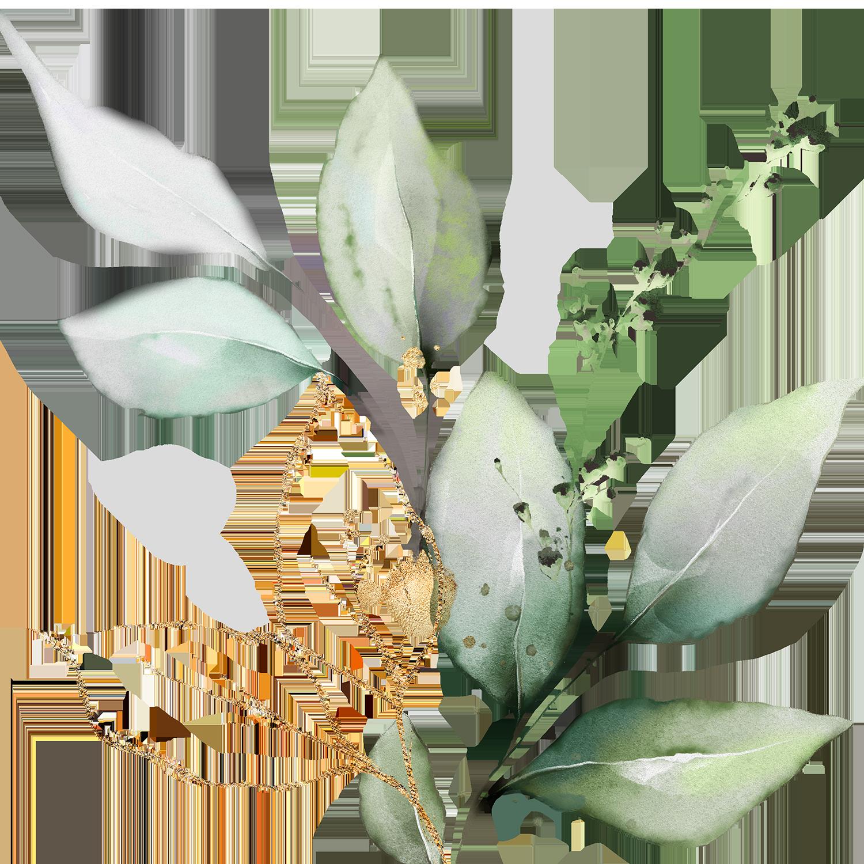 InspiredFine ArtPhotographyfor Blooming Families -