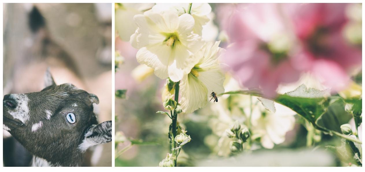 002-AmandaKoppImages-Colorado-Farm-Wedding-Photo.jpg