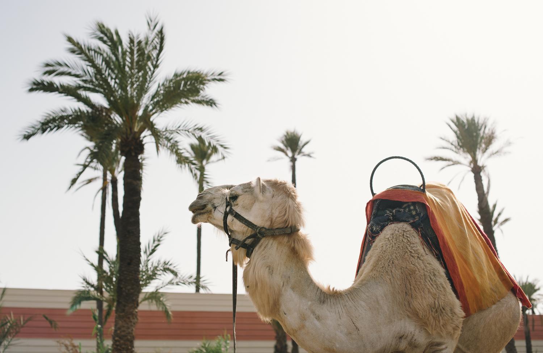 Morocco destination wedding photo-90.jpg