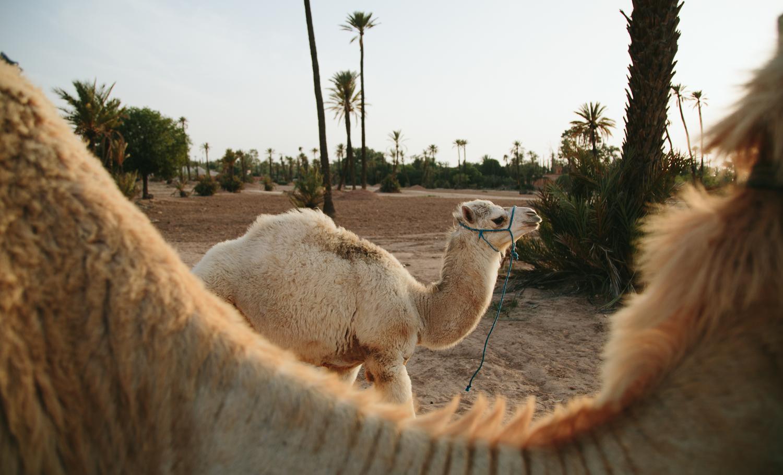 Morocco destination wedding photo-104.jpg