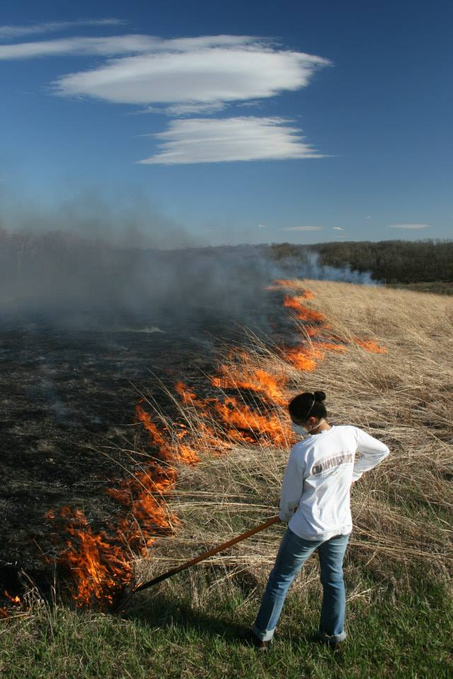 A controlled burn in the restored prairie
