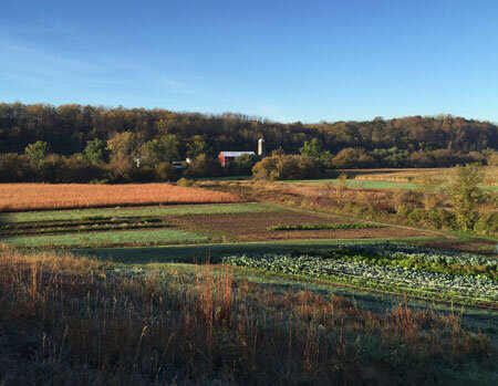 A view of our produce fields and barn from the prairie remnant.