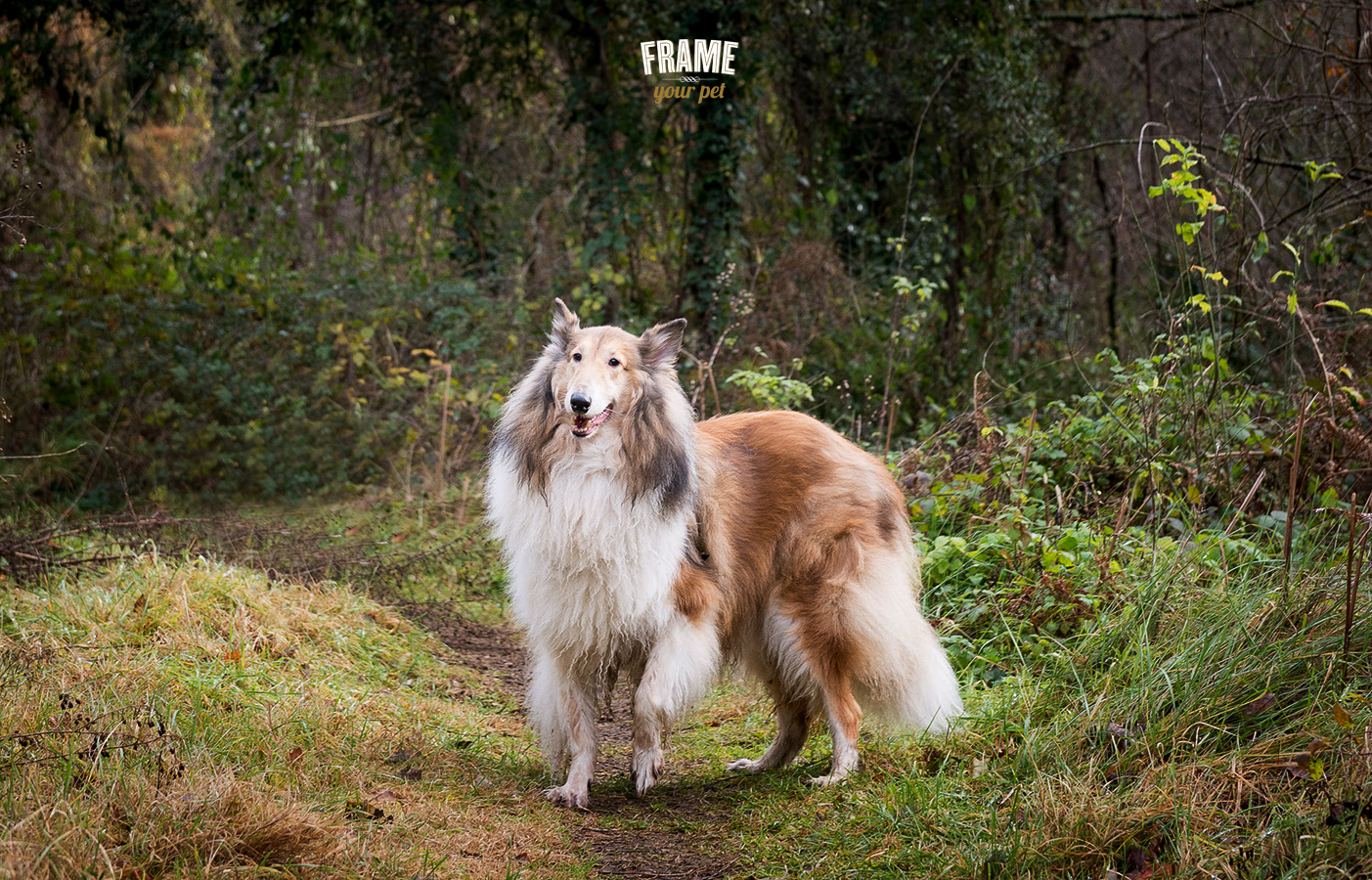 There we go! Vincent again. But I have to admit it... He is a very handsome collie!