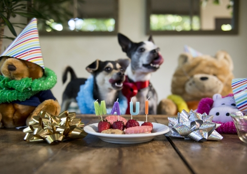Celebrating Maui's 7th birthday.
