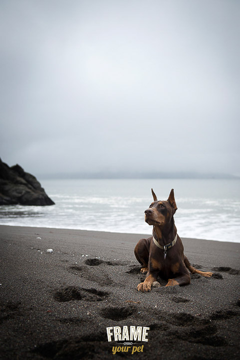 Bosch, the Doberman. He is already 12 years old!