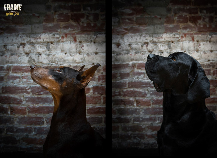 Indoor session at home. Dog photography with natural light.