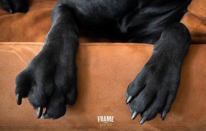 dog-photographer-Los-Angeles-bullmastiff-doberman-photo-session-Frame-Your-Pet-30-2.jpg