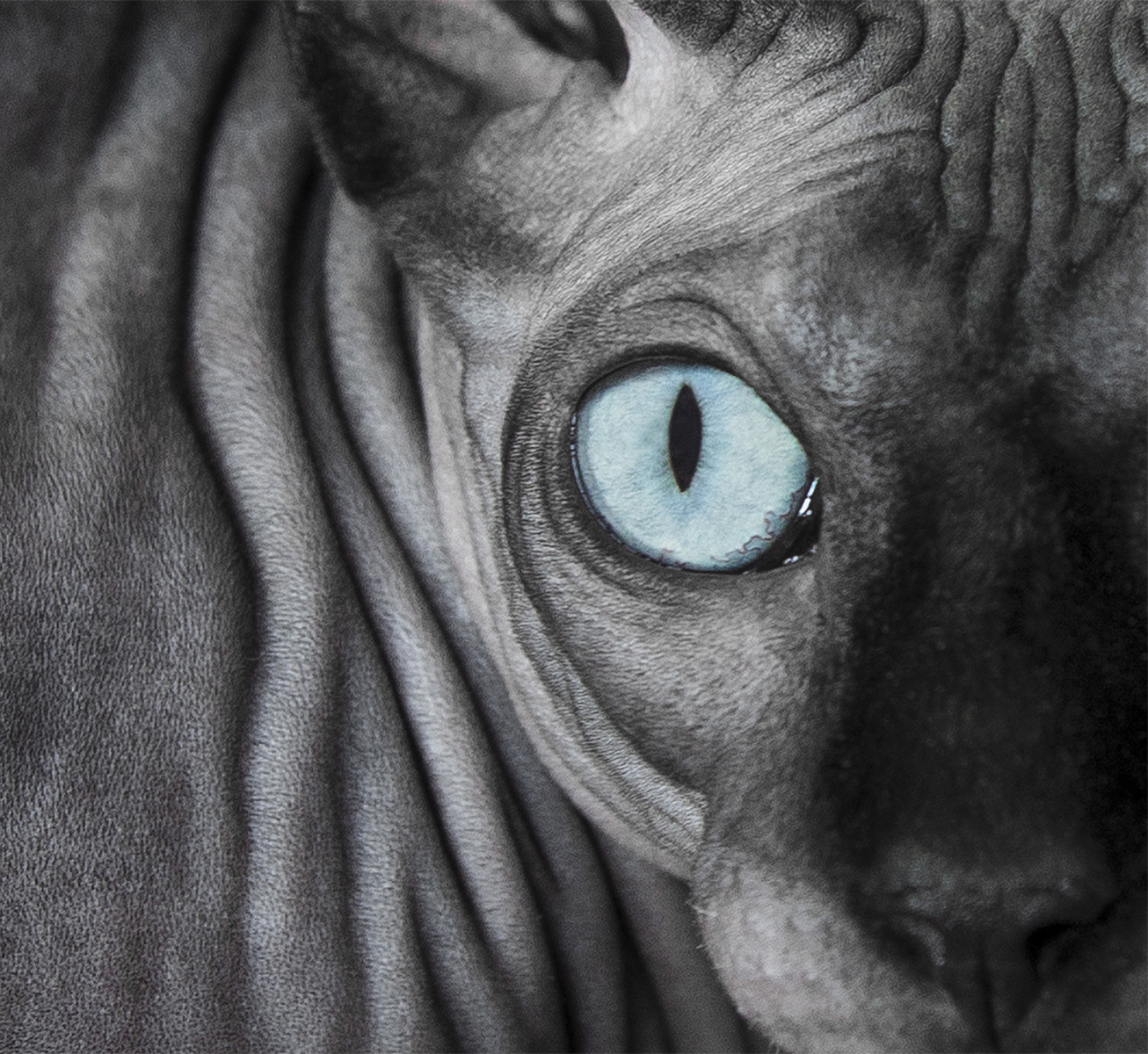 cat-with-blue-eyes-picture.jpg