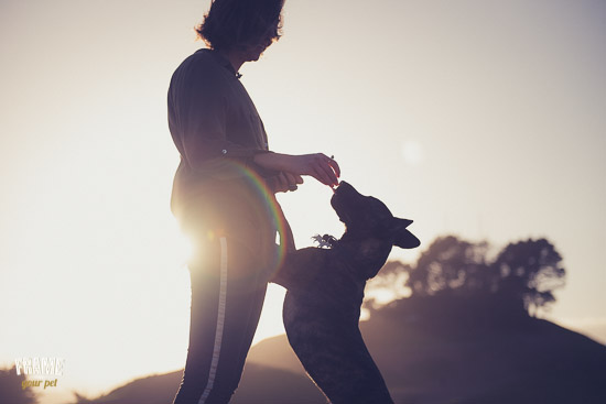 The light during the sunset is perfect to create candid and warm portraits. Here Alana was giving Lily a treat for being such a good dog model.