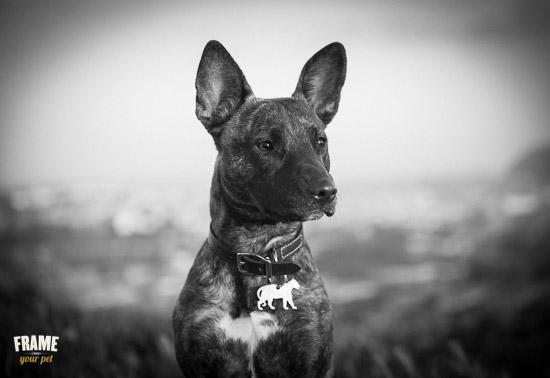 beautiful-dog-portrait-black-white-SF.jpg