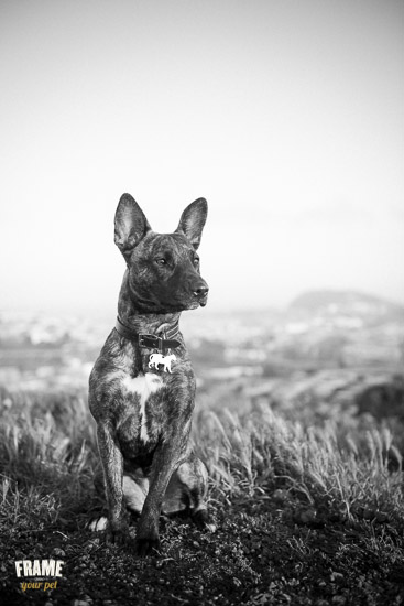 beautiful-dog-portrait-black-white.jpg