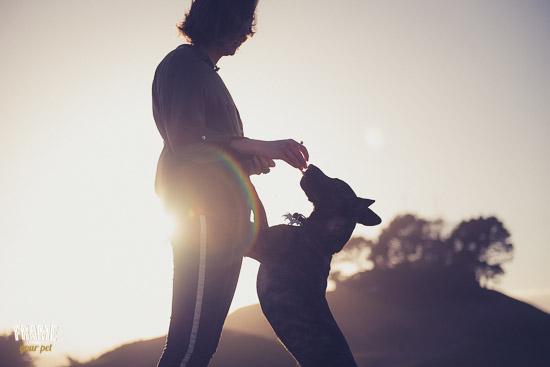 dog-photoshoot-in-the-sunset-Bay-Area-caligornia.jpg