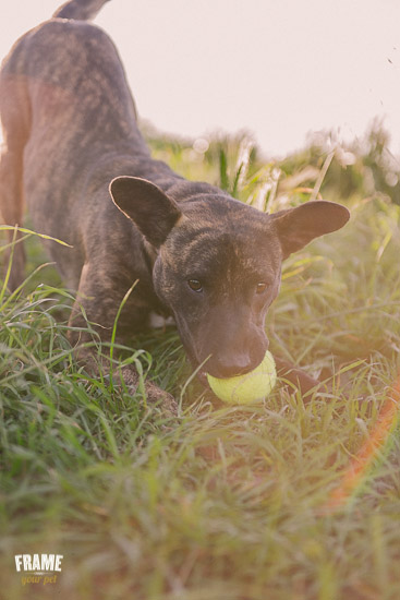 playful-dog-with-ball-in-nature.jpg