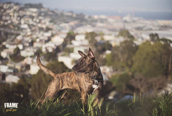mutt-dog-playing-outdoors-frame-your-pet.jpg