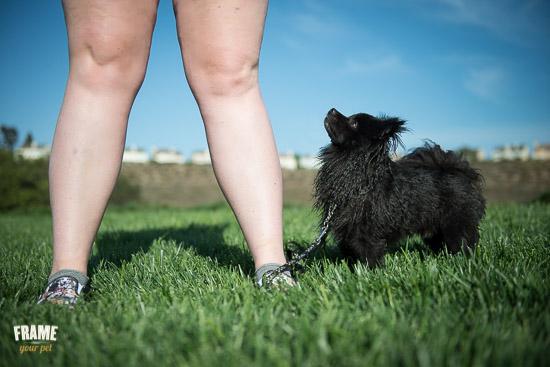 rescued-pomeranian-photoshoot-Los-Angeles-dog-photographer-7.jpg