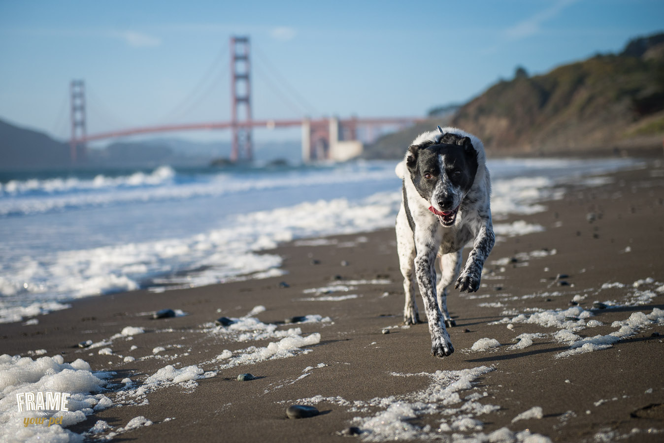 los-angeles-modern-dog-photography