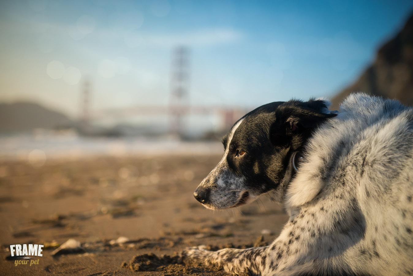 los-angeles-best-pet-photographer