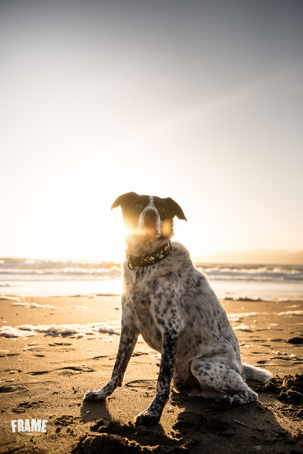 dog photos against sunset