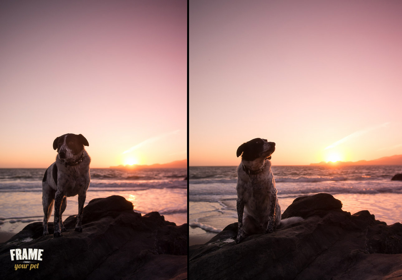 dog photo shoot during sunset at baker beach