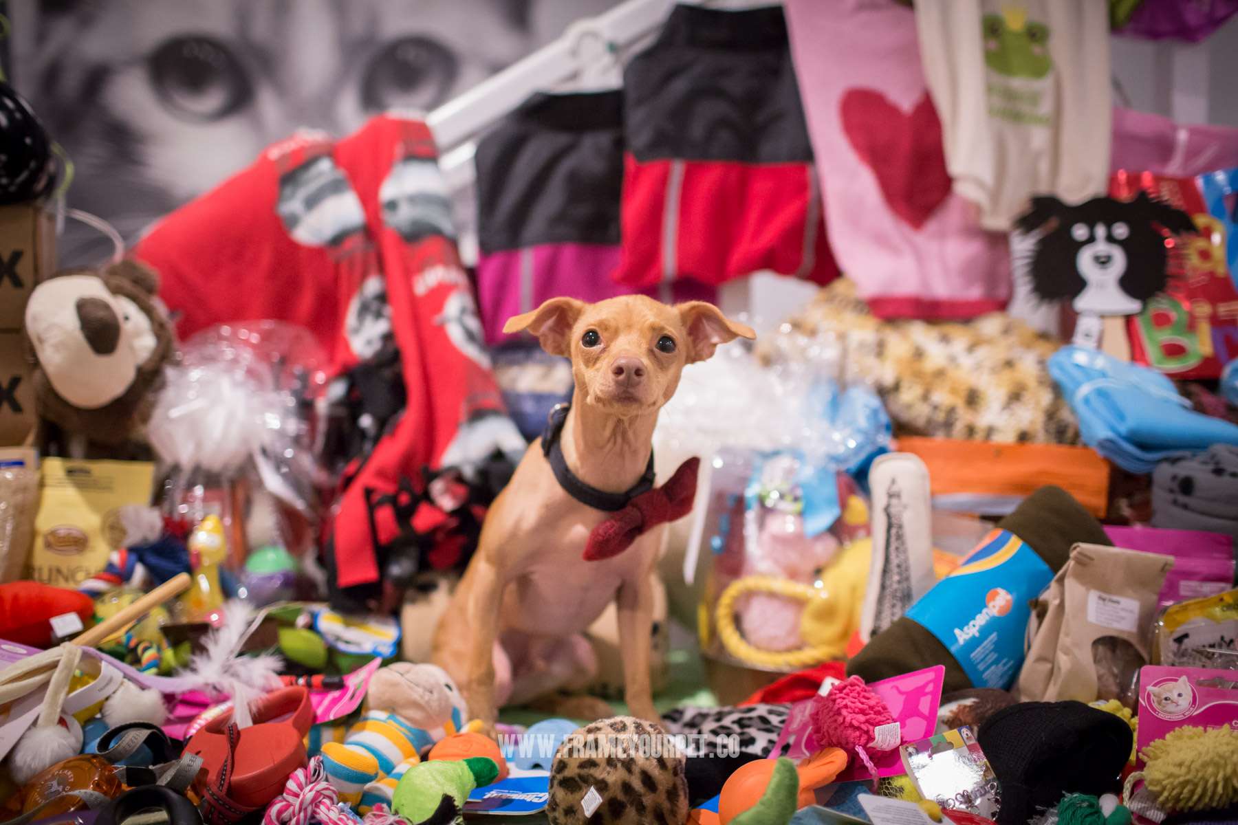Tuna with all the toys, food and accessories that were donated for the rescued dogs at NKLA Adoption Center