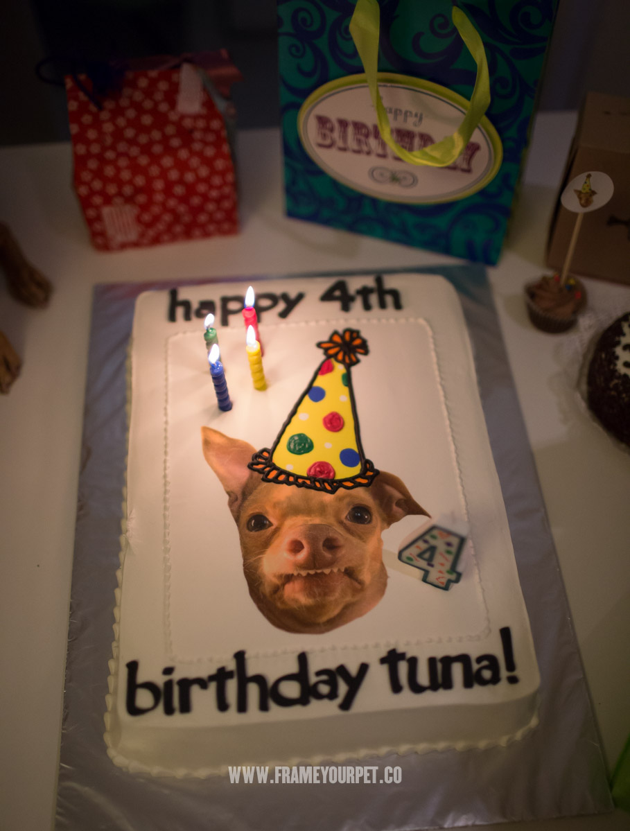 tuna-the-dog-NKLA-frame-your-pet-58.jpg